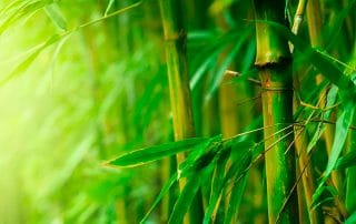 5 ways to use bamboo in your home