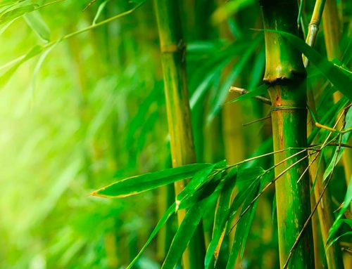 5 Ways to Use Bamboo in Your Home Décor